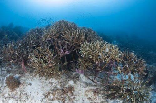 Gabriel Barathieu_Yaf Keru Reef Restoration Raja Ampat